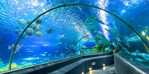 Du lịch Nha Trang - Viện Hải dương học